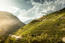 Besondere Erlebnisse in Schweizer Weinanbaugebieten