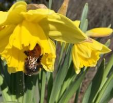 Svenskt Sigill räddar humlor, bin och fåglar