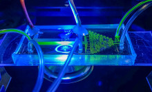 Novel technology for the selection of single photosynthetic cells for industry and ecosystem understanding