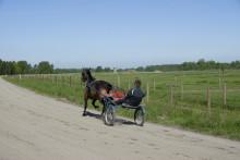 Hästnäringen i Sjöbo kommun kartläggs