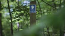 Var med och invig Torups naturreservat med naturbingo!