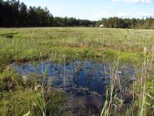 Våtmarker fortsatt viktigt i det svenska miljöarbetet