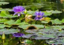 Sådan indretter du din have med vand og skaber en skøn oase