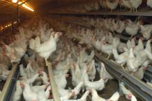 Omfattande arbete mot fågelinfluensa – flera organisationer bistår