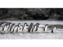 Will Burrand-Lucas, A7R IV, penguin 3