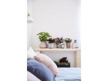 Lugnt och skönt i sovrummet med svenskodlade växter i dämpade toner.