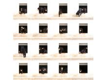 Alexandra Cearns, Australia, Entry, Open, Enhanced, 2017 Sony World Photography Awards