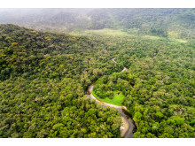 Amazonas-Regenwald in Südamerika
