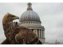 Eagle St- Paul 2