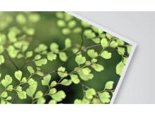 Ecoprint Skummad PP