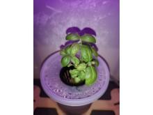 Hydroponi: Få en innføring i hvordan du kan dyrke uten jord.