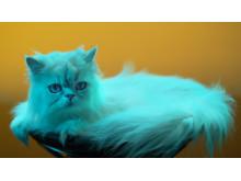 GTK-XB7 von Sony_Animal_Campaign_10