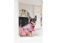 Sony Animal Eye AF Dolly Pawton 5