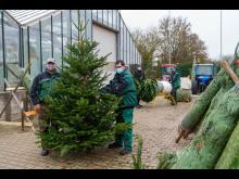 201210-pm-weihnachtsbaumverkauf