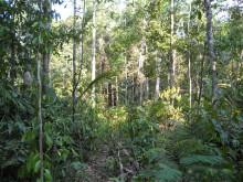 Regnskogen i Amazonas i Brasilien