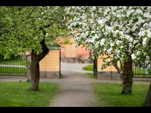 Svindersviks trädgård