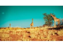 Alphaddicted_Roadtrip Namibia_03