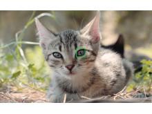 cat EYE AF
