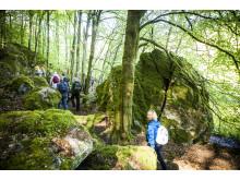 Nya vandringsleder i varierad natur på Sveriges största vandringsfestival