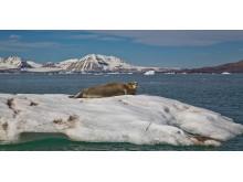 Complete-Spitsbergen-Expedition_Illustration-Photo_Kongsfjorden©Per-Lillehagen