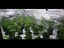 Plants seized [3]
