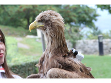 Action Cam - eagle