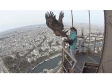 Tour Eiffel - eagle
