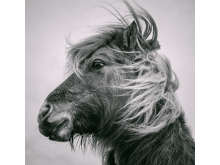 © Michael Faint, United Kingdom, Shortlist, Open competition, Natural World & Wildlife, 2020 Sony World Photography Awards.jpg