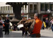 Lot orła nad Kolonią