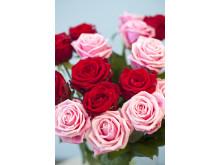 Bukett med rosa och röda rosor