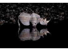 Jan Ryser,  Black rhinoceros at night