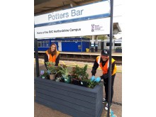 Potters Bar station planting