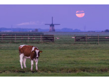 Dutch_Supermoon_1_Fullres_AlbertDros