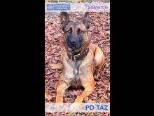 PD Taz