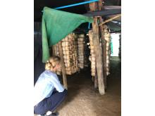 Lokale undervises i klimavenligt landbrug, bl.a. svampedyrkning