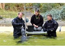 PI-Zoo-DARWINEUM-82-2017_Seehund-Patenschaft_Karsten Pannwitt OSPA_Tim Schmitt Rostocker Robben_Zoo Rostock_Kloock_01