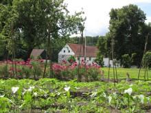 Hovdala slottsträdgård
