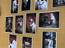 Ærø Dog Days - wall of Fame
