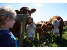 Urlaub auf dem Ferienhof | Kühe
