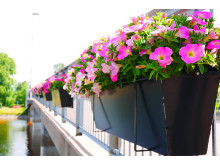 Blommor vid Sandgrundsbron