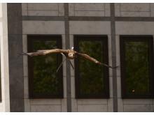 Cologne Flight