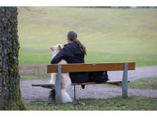 Sveland hjälper våldsutsattas djur
