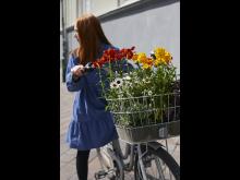 Gyllenlack och atlaskrage i cykelkorgen