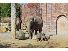Elefantenbaby in der Außenanlage im Zoo Leipzig