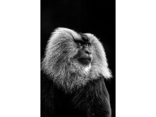 ZhayynnJames_India_Open_WildlifeOpencompetition_2018