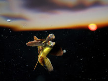 Flying into the sunset, fot. Eric Madeja