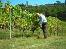 Toscana_riviera_seniorfavoritt