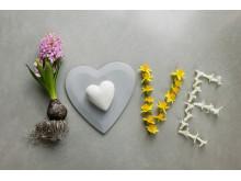 LOVE med vårlökar