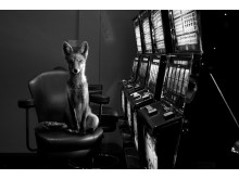 © Jason McGroarty_Totem Fox_2nd-place  Ireland National-Awards