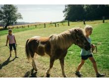 Urlaub auf dem Ferienhof | Ponyreiten